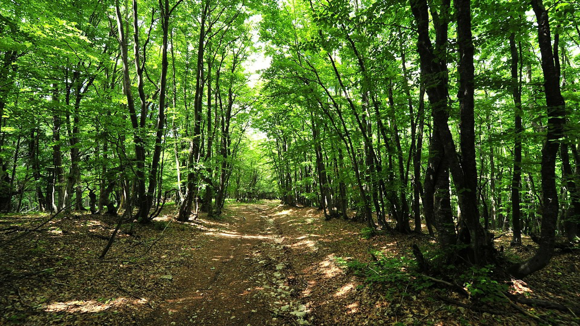crimean_forest_path